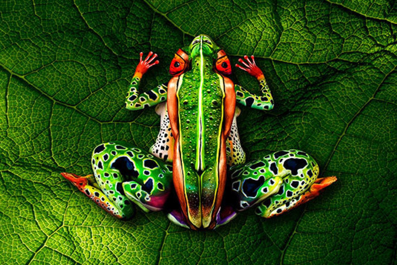 illusion divers - grenouille ?